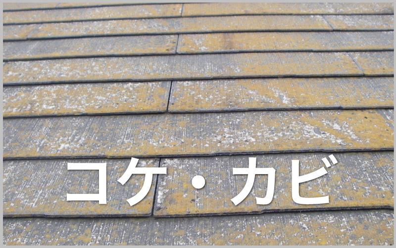 スレートコケ・カビ