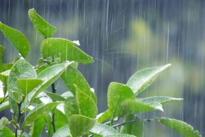 雨漏り_3